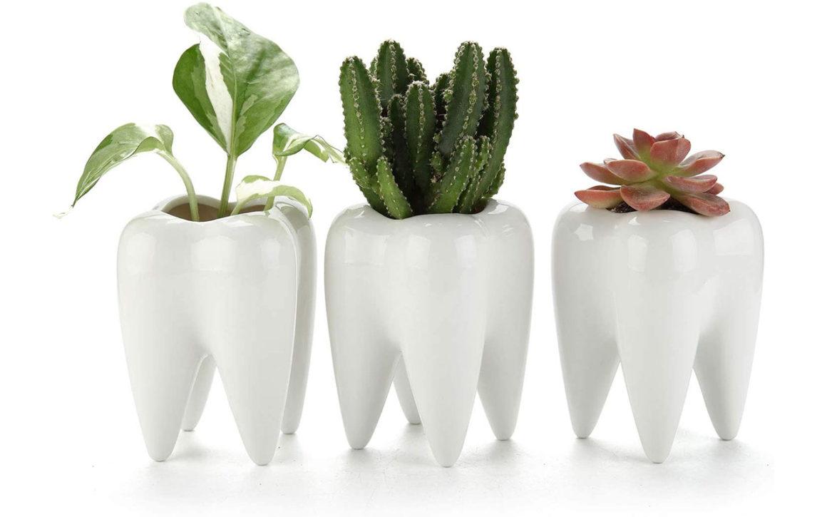 Zahn-Blumenvasen